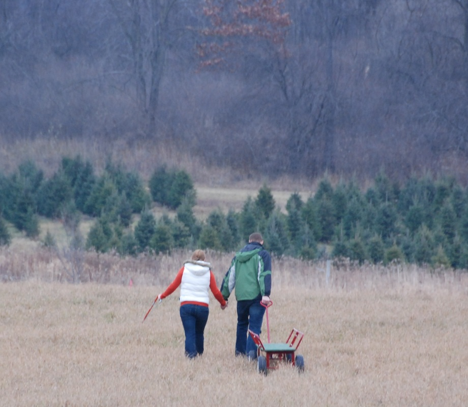 Hillside Christmas Tree Farm - Home